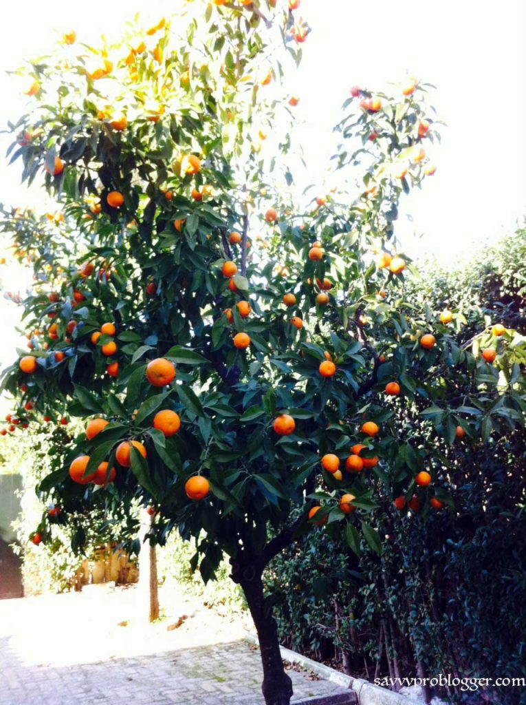 make everyday earth day orange tree